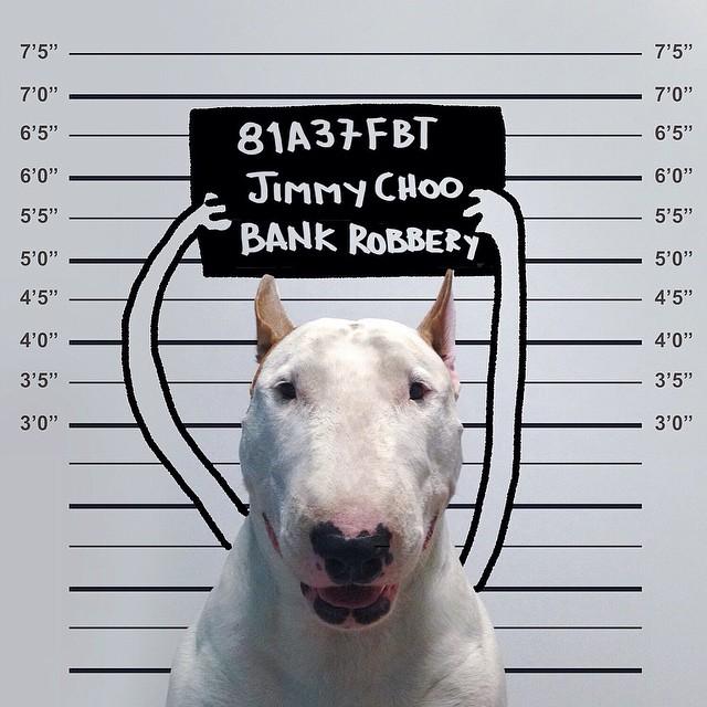 pies-3 Pies, który zrobił karierę na Instagramie! Niesamowicie twórczy Pan i jego pies.