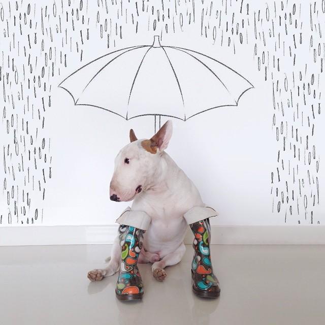 pies-4 Pies, który zrobił karierę na Instagramie! Niesamowicie twórczy Pan i jego pies.