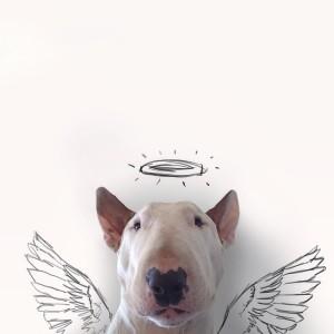 pies-na-instagramie-2-300x300 Pies, który zrobił karierę na Instagramie! Niesamowicie twórczy Pan i jego pies.